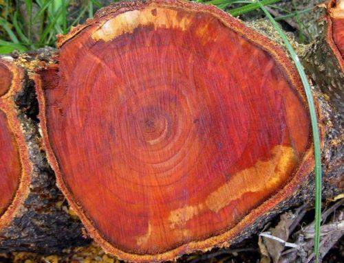 Красное дерево и Венге в современном интерере
